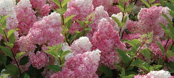 Van Meuwen Flowers and Plants
