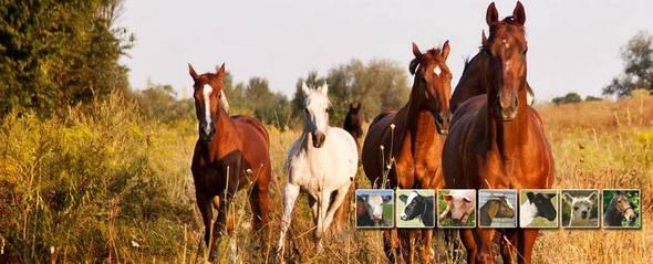 Valley Vet Horse Supplies