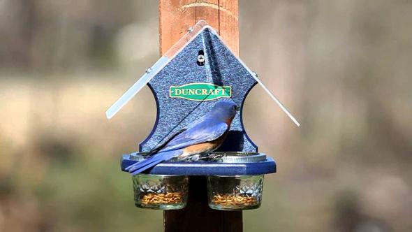 Duncraft Bird Feeder