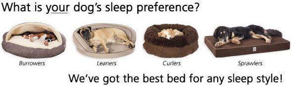 In The Company Of Dogs Beds Range
