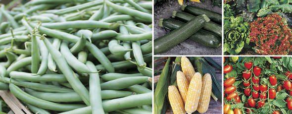 Park Seed Vegetables