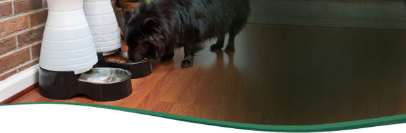 PetSafe Automatic Feeder