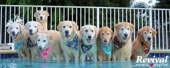 Revival Animal Health Pet Supplies