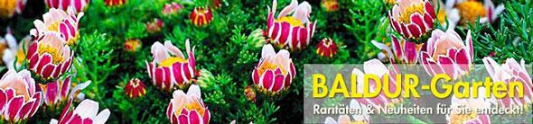 BALDUR Garten Teaser